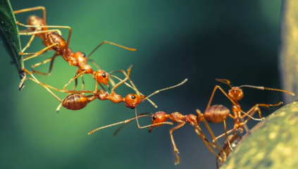 Ants HPTs